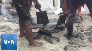 Baixar Residents Help Clear Oil Slicks on Brazilian Beaches