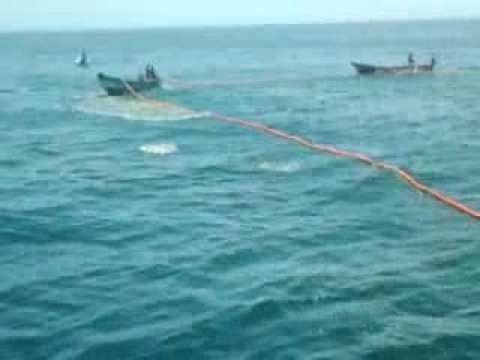 Fishing from Nagapattinam using Surukku valai(Fishing Net)