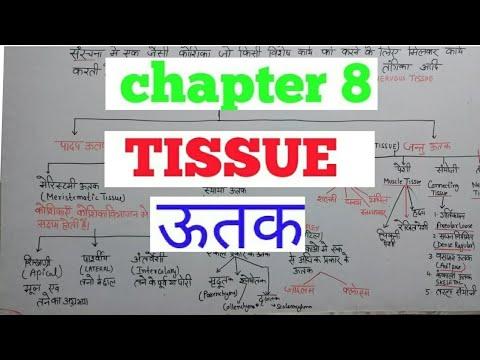 Tissue: Biology
