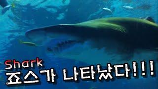 [숨멎주의!! 거대 상어!!] 부산 씨라이프 아쿠아리움…