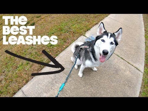 Choosing The BEST Leash For Your Husky!