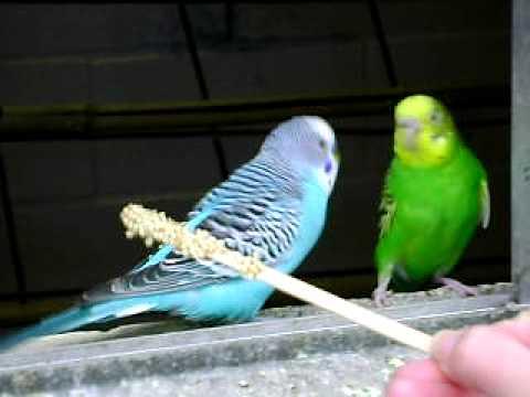 Stephanie Feeding The Birds - Pt II