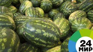 Лучшая ягода: астраханские фермеры начали сбор арбузов