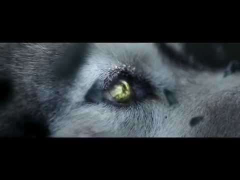 Lone Wolf Amazing Motivational  Video