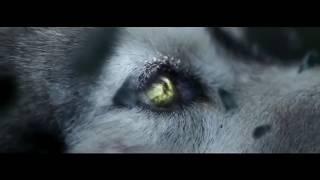 Lone Wolf Amazing Motivational  Video