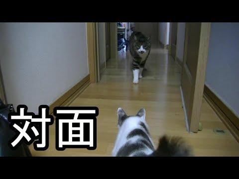 先住猫と子猫を対面させてみた