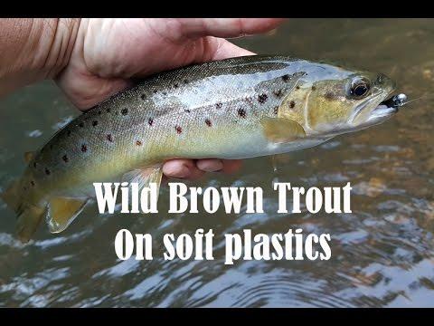 Wild brown trout on soft plastics