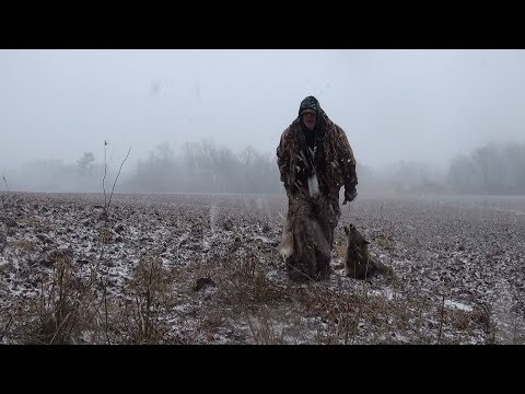 Coyote Hunting 2019 Mp3