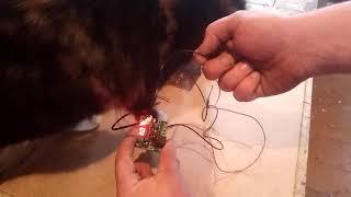 Подключение и настройка терморегулятора для инкубатора , И где взять 12 вольт