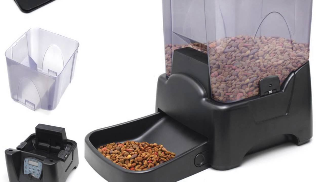andrew timer feeder cat pets automatic day james from feeders uk pet image