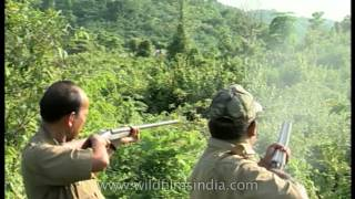 Firing at elephants, to chase them away from Assam tea gardens!
