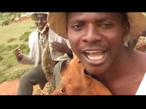 Download CORNELIUS NGULUWA     MBI PLANG