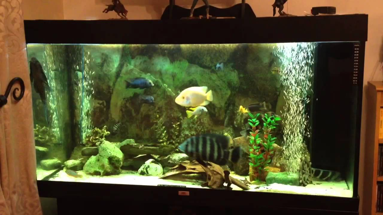 cichlid juwel rio 300 aquarium update youtube. Black Bedroom Furniture Sets. Home Design Ideas