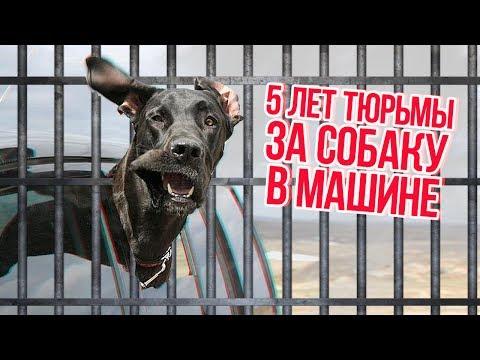 ТОП 5 ОЧЕНЬ ТУПЫХ ПРАВИЛ ПДД