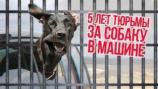ТОП 5 ОЧЕНЬ ТУПЫХ ПРАВИЛ ПДД !!!
