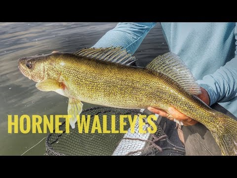 Trolling Hornets For WALLEYE On Lake Sakakawea