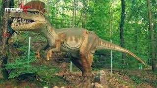 Dino Parc - Rasnov - DinoLand - the land of dinosaurs - taramul dinozaurilor
