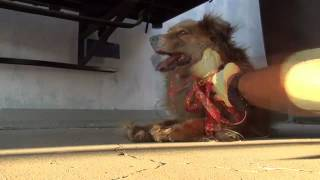 an amazing dog rescue story please watch share mp4