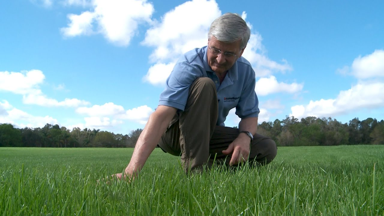 Keep A Lush Lawn Without Wasting Water Consumer Reports Youtube