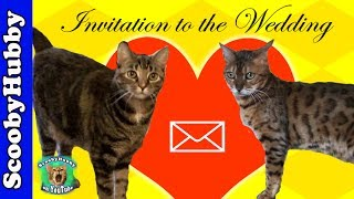 Invitation to the Wedding -- Cat Clips #245