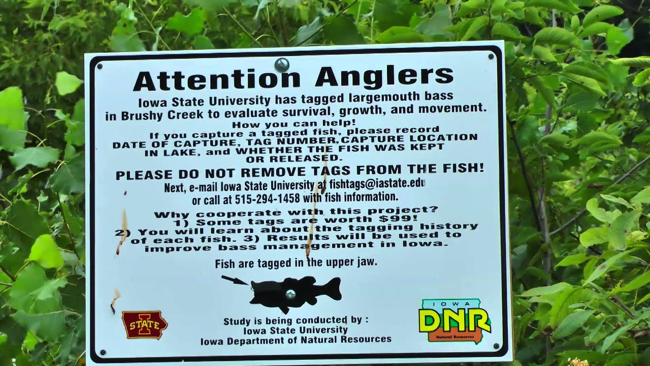 Iowa State University Iowa Dnr Bass Tagging Program At Brushy Creek Lake Youtube