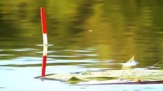 Рыбалка на удочку весной - Клёв был хороший, даже черви кончились!