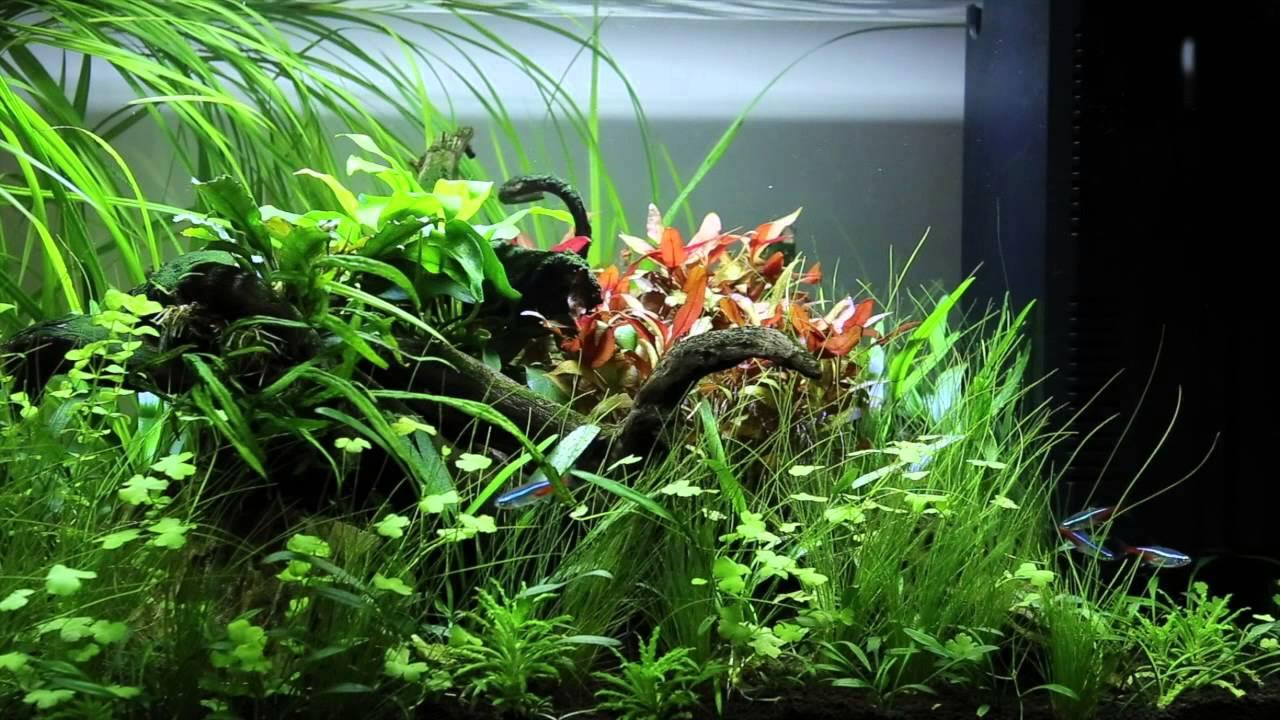 Superfish aquarium fish tank aqua 60 - Superfish Aquarium Fish Tank Aqua 60