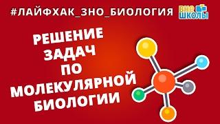Лайфхак_ЗНО_Биология. Решение задач по молекулярной биологии