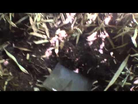 Animal Tractor:Wild Turkey compost