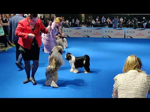 Euro Dog Show 2018 Tibetan Terrier Winners
