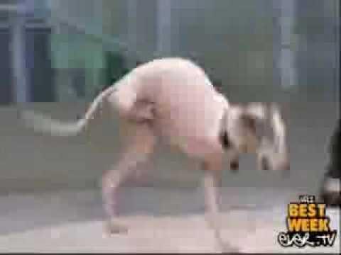 Two Side Leg Dog