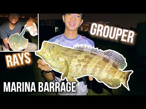 Surfcasting At Marina Barrage (Grouper Catch And Cook!)