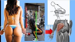 【解剖学】尻を効率的に鍛えるスクワットのやり方【科学的】