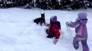Cute puppy hops in deep snow on a snow day!
