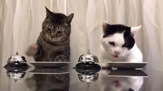 СМЕШНОЕ видео ПРО ЖИВОТНЫХ 2019, Подборка приколов с животными