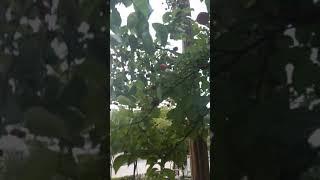 산딸기가 나타났다