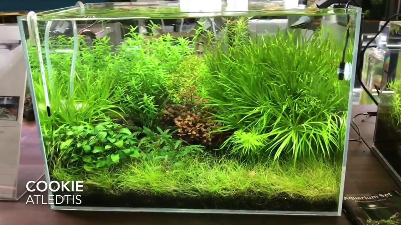 atledtis cookie spot led rgb pour aquarium plant youtube. Black Bedroom Furniture Sets. Home Design Ideas
