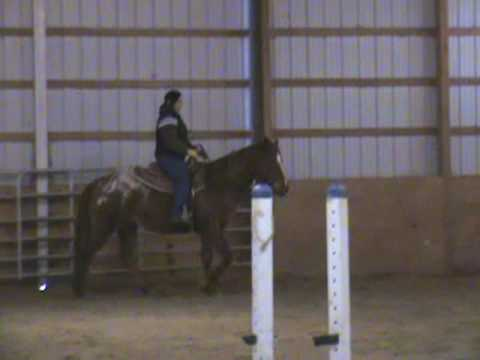 Appaloosa Horse for sale in New Jersey