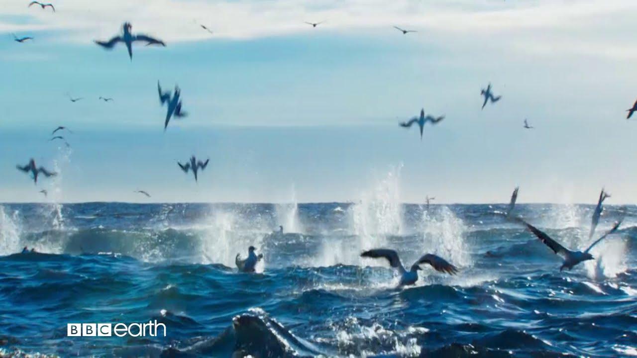 Planeta Doskonała w BBC Earth