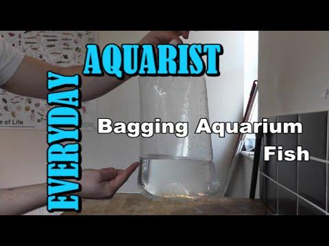 How To Bag / Transport Aquarium Fish
