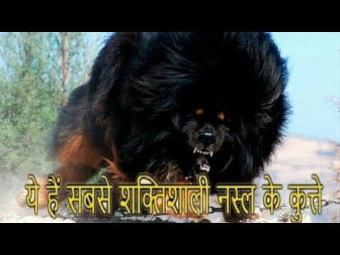 "TOP-10 Strongest Dog Breed In The World /by ""Aryan Dog Club"" Aryandogclub"