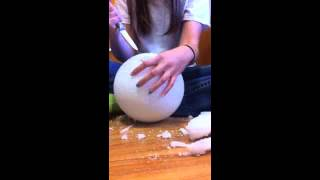 How to make an animal cell model
