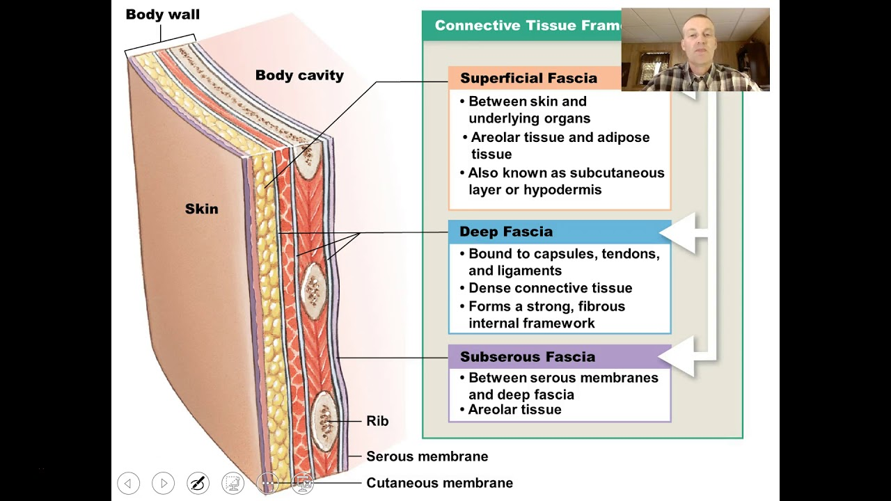 Integumentary System Video 1 Youtube