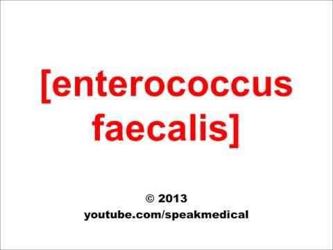 Pronounce Enterococcus Faecalis| SpeakMedical