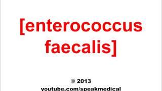 A belgyógyászat alapjai 1. | Digitális Tankönyvtár, Enterococcus faecalis kezelése természetesen