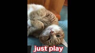Keyboard Cat JUST PLAYS at Christmas