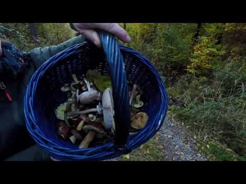 Mushroom Hunting - GoPro Hero 5