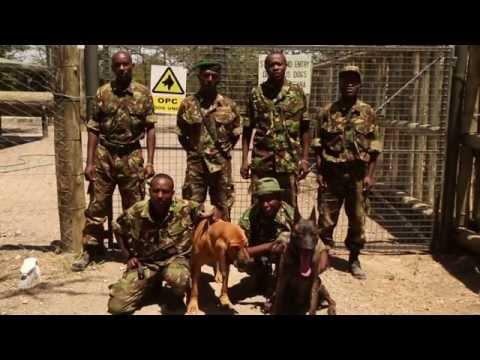 Training the Rhino Dog Squad to save rhinos
