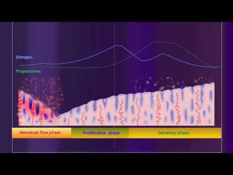วิชาชีววิทยา - บทบาทของฮอร์โมนในการควบคุมระบบสืบพันธุ์