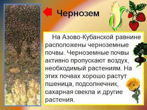 Презентацию на тему животные и почва
